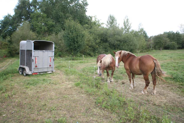 1moussis_draft_horses_trailer