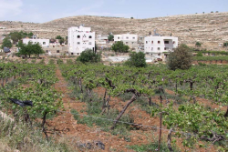 1hebron_arab_muslim_villas_vineyard