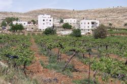 1hebron_arab_muslim_villas_vineyard