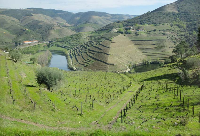 1douro_slopes_terraces