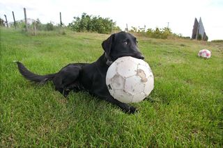 1renaud_guettier_dog_fetch_ball