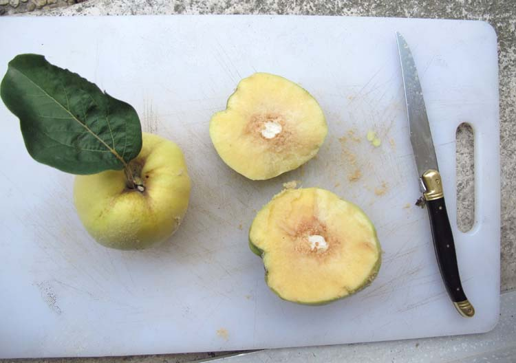 1acidic_quince_cut_in_two