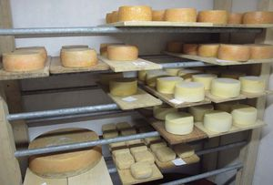 1hungary_cheese_sandor_tamas_room2