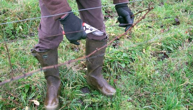 1CRB_didier_barrouillet_pruning_cane