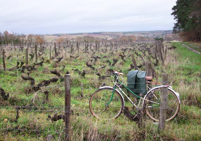 1CRB_bicycle_in_old_vines