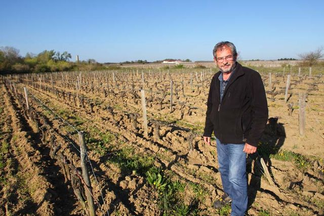 1planquettre_medoc_didier_michaud_vineyard