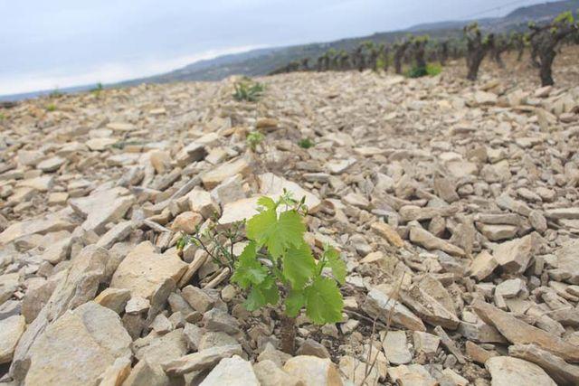 1deux_terres_ardeche_young_grenacheon_stones