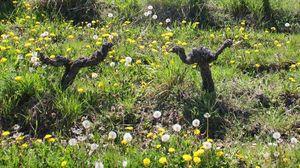 1crb_dancing_among_flowers_crop
