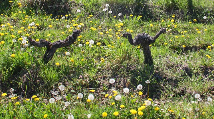 1crb_dancing_among_flowers_crop