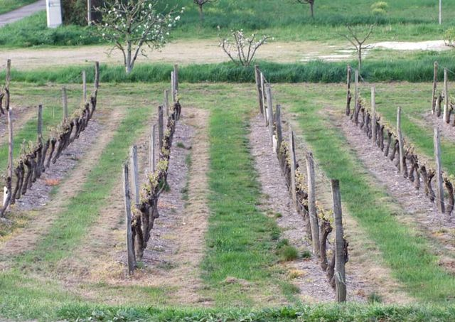 1herbicide_vineyard2