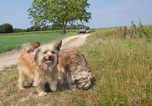 1francois_chidaine_dogs_along_parcel