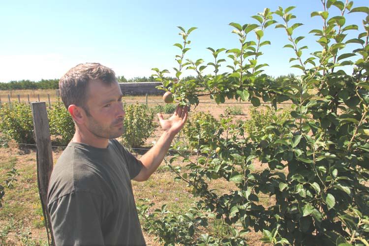 1reynald_heaule_orchard_apple-tree