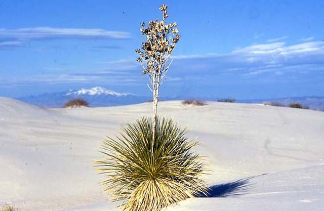 1white_sands_new_mexico