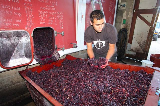 1yvon_metras_pressing_jules_grapes