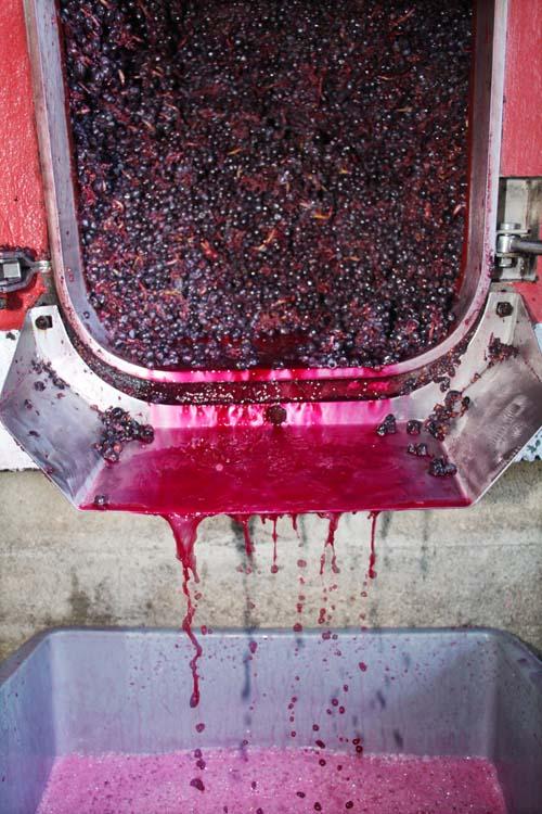 1yvon_metras_pressing_juice_flowing_fermenter