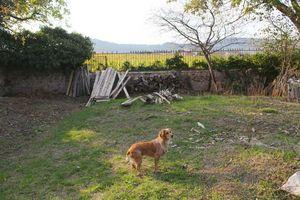 1julie_balagny_garden_view_on_vineyard