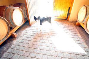 1marcel_grillet_domaines_dog