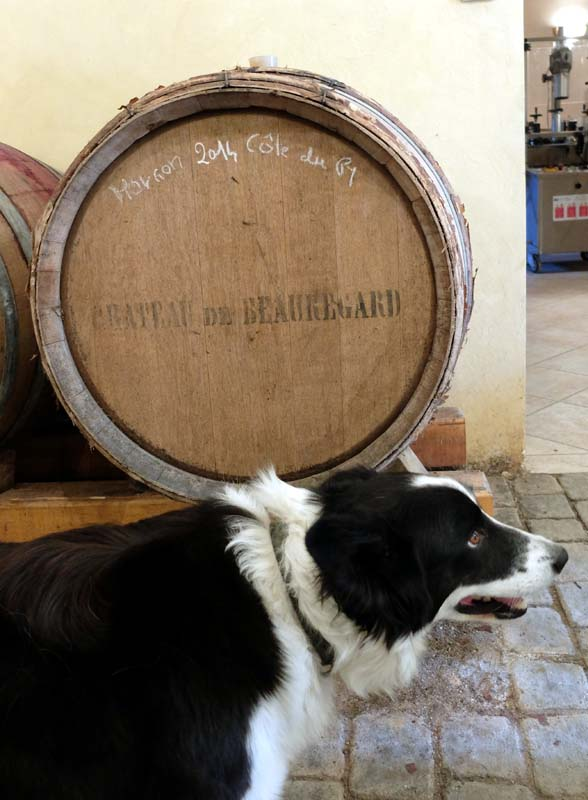 1marcel_grillet_dog_melisse_in_cellar