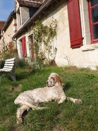 1biodynamics501_laurent_panache_dog
