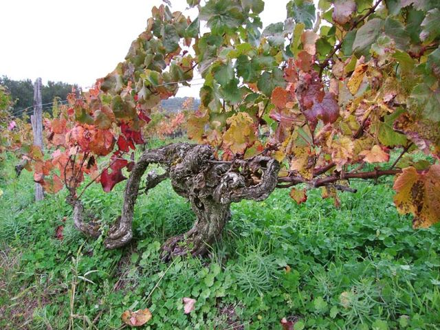1biodynamics501_happy_very_old_vine_cot