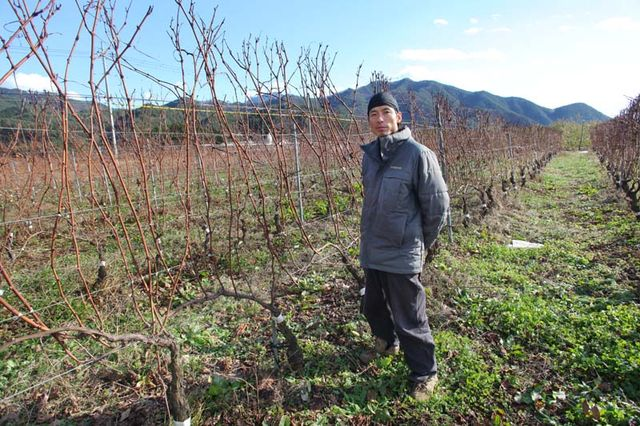 1beau_paysage_eishi_okamoto_in_his_vineyards