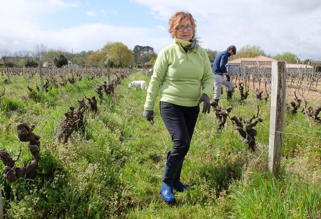 1rousset-peyraguey_vineyard_staff