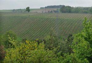 1burgundy_tonnerre_vineyards