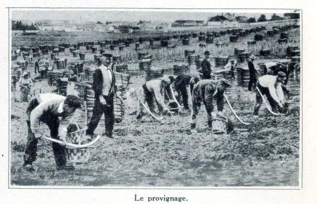 1champagne_1920s-1provinage
