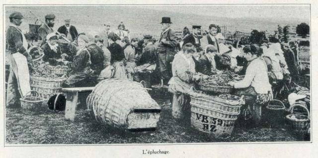1champagne_1920s-5epluchage
