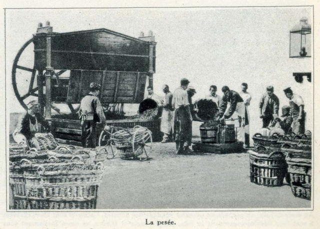 1champagne_1920s-5pesee
