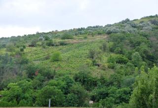 1tokaj_slopes_vineyards_woods