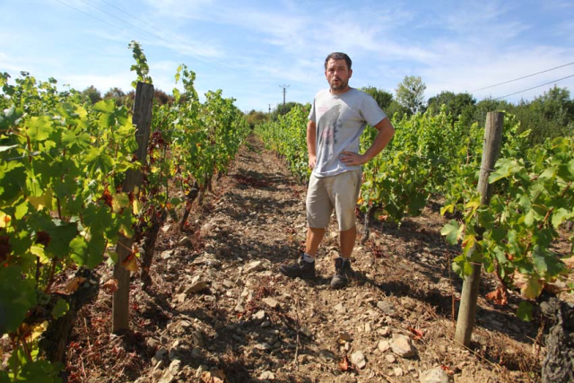 1adrien_de_mello_vineyard