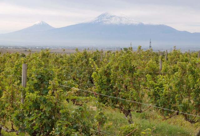 1van_ardi_vineyards_mount_ararat