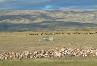1armas_estate_cattle_landscape