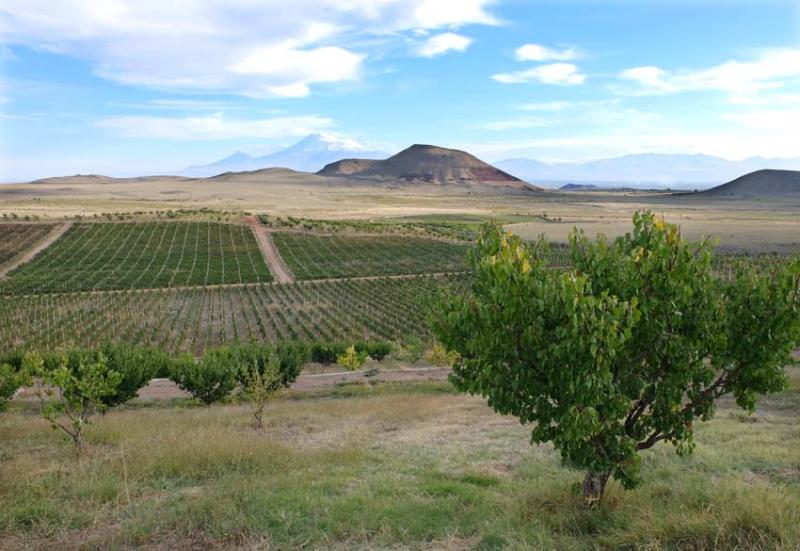 1armas_estate_orchard_vineyard