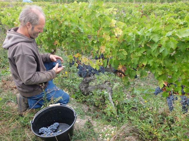 1bruno_allion_picking_harvest