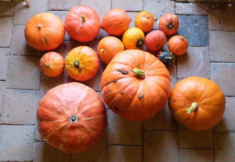 1news_pumpkins2016