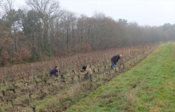 1laurent_saillard_pruning