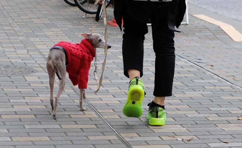 1tokyo_shibuya_red_dog_green_shoes