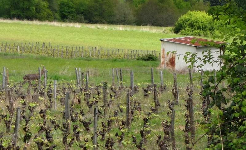 1francois_saint_leger_brocard_vignes