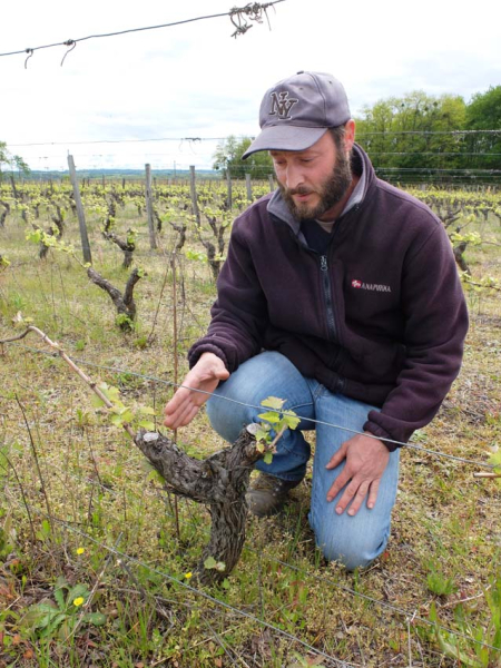 1francois_saint_leger_explaining_the pruning