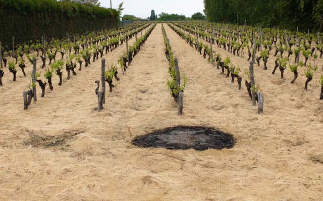 1herbicide_frost_fire_vineyard