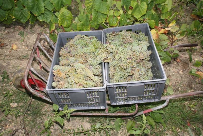 1bruno_allion_full_wheelbarrow