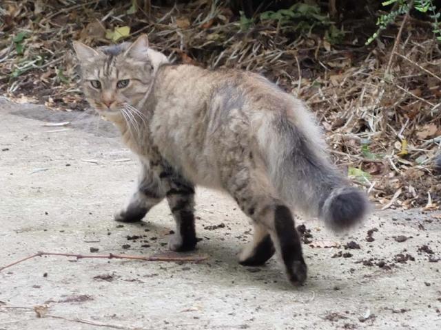 1paris_belleville_harvest_passing_cat
