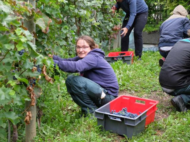 1paris_belleville_harvest_sophia_picking