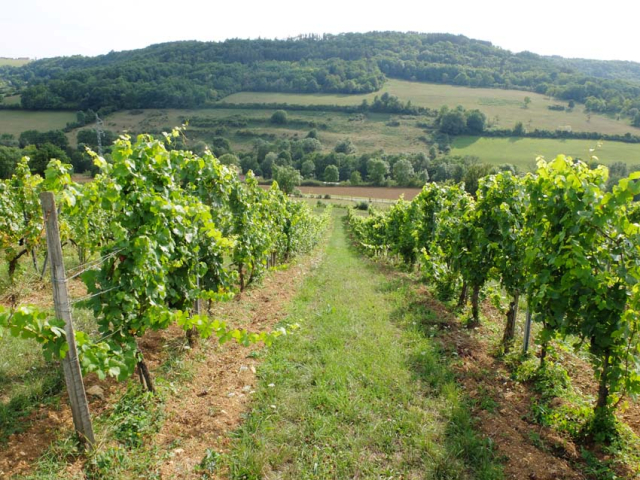1flavigny_converted_vines_from_lyre