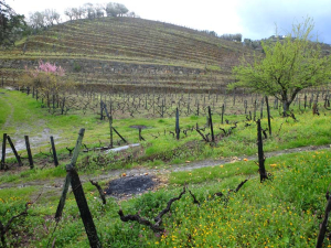 1douro_casa_amarela_orange_trees_vineyards