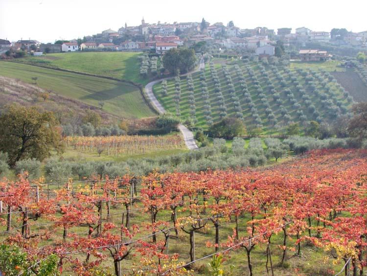 1emidio_pepe_torano_nuovo_vineyard