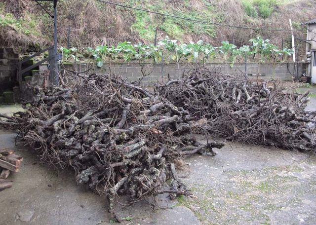 1old-vines_roots_heating-wood_pile