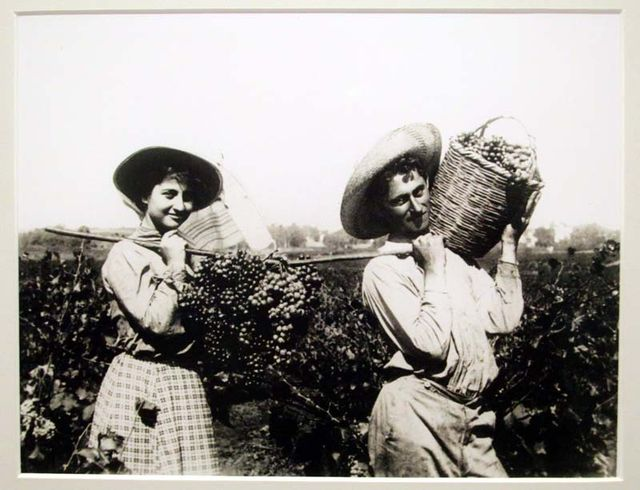 1grape_harvest_palestine1913